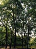 Heerlijke groen Stock Afbeelding