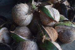 Heerlijke kokosnoot voor verkoop Royalty-vrije Stock Afbeeldingen