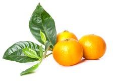 Heerlijke mandarin Royalty-vrije Stock Fotografie