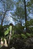 Hefboom-in-de-preekstoel, de Mening van het Oog van een Insect Royalty-vrije Stock Fotografie