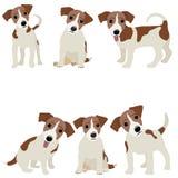 Hefboom Russell Terrier Vectorillustratie van een hond vector illustratie