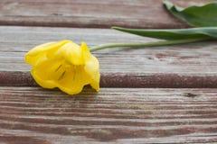 Heftige gelbe Tulpe, die auf einer schäbigen hölzernen Planke liegt Lizenzfreie Stockfotografie