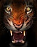 Heftiger Tiger Lizenzfreie Stockfotos