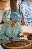 HEHO, MYANMAR, EL 12 DE SEPTIEMBRE DE 2016: Mujer birmana local que selecciona las frutas y los corazones secados para exportarlo Fotografía de archivo
