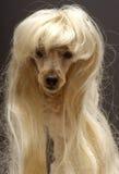 Heiße Blondine Stockfotos