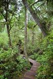 Heiße Frühlings-Bucht-Regenwald Lizenzfreies Stockfoto