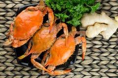Heiße gedämpfte blaue Krabben mit Ingwer Maryland-Krabben Gekocht und essfertig Lizenzfreies Stockfoto