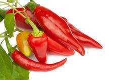 Heißer roter Paprika- oder Paprikapfeffer Lizenzfreie Stockfotografie