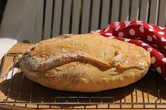 Heißes selbst gemachtes Brot Lizenzfreie Stockfotografie