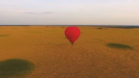 Heißluftballon, der niedrig über das goldene Feld, Einsamkeit genießend, Ablenkung schwimmt stock footage