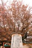 Heian寺庙在京都,日本 免版税库存图片