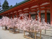 Heianheiligdom in de lente, Kyoto Japan Stock Afbeeldingen