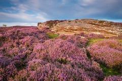 Heide auf Rothbury-Terrassen Lizenzfreies Stockbild