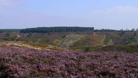 Heide bij Cannock-de Jacht, Engeland Stock Afbeelding