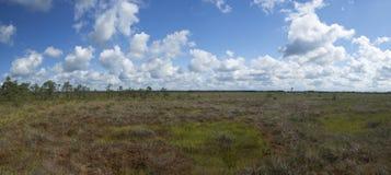 Heide in de zomer Stock Fotografie