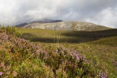 Heide in den schottischen Hochländern Stockfotos