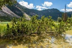 Heide, der von einem See wächst Lizenzfreies Stockbild
