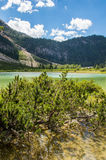Heide, der von einem See wächst Stockfoto