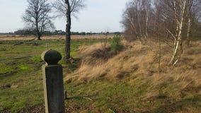 Heide di Strabrechtse Immagine Stock