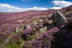 Heide en rotsen Royalty-vrije Stock Afbeelding