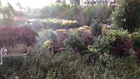 Heide in Garten-Center stock video