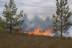 Heide im Feuer Stockbild