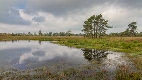 Heide in Kalmthout België stock afbeeldingen