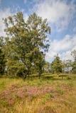 Heide in Kalmthout België royalty-vrije stock afbeeldingen