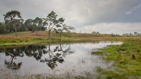 Heide in Kalmthout Belgien stockbild