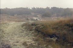 Heide mit Nebel Stockfoto