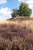 Heide und ernster Hügel Stockfotos