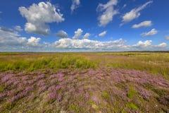 Heideanlagen in Fochtelooerveen Lizenzfreie Stockfotos