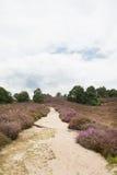 Heidelandschap Stock Afbeelding
