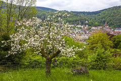 Heidelberg city in spring, Baden-Wurttemberg, Germany Stock Image