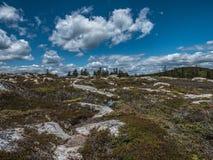 Heidelebensraum auf kleiner Elch-Insel Lizenzfreie Stockbilder