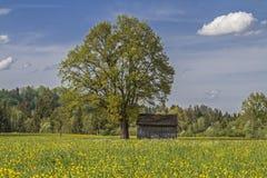 Heidemoorwiese im Frühjahr Lizenzfreies Stockfoto