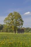 Heidemoorwiese im Frühjahr Stockbilder