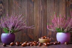 Heiden in ceramische potten en paardekastanjes Royalty-vrije Stock Afbeeldingen