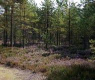 Heiden in het bos royalty-vrije stock foto