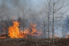 Heidewald im Feuer Lizenzfreie Stockfotos