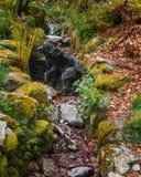 Heidi labradoren i The Creek royaltyfria foton