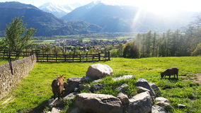 Heidiland in Switzerland Stock Images