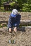 ` 09 HeiferPlanting - сад Стоковые Фотографии RF