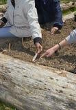 HeiferPlanting ` 09 - ogród Zdjęcie Royalty Free