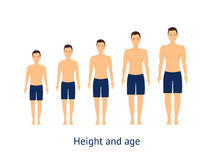Height and Age Stage of Growth from Boy to Man. Vector Stock Images