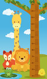 Height chart animals Stock Photos