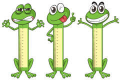 Height measurement chart with frog characters. Illustration vector illustration