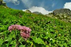 Height Tatras Royalty Free Stock Image