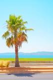 Heilig-RAPHAEL-Strand, Seeschacht und Palme. Provence Lizenzfreie Stockfotografie