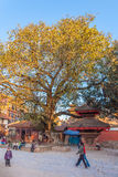Heiligdom in een boom - Durbar-vierkant, Katmandu Royalty-vrije Stock Afbeelding
